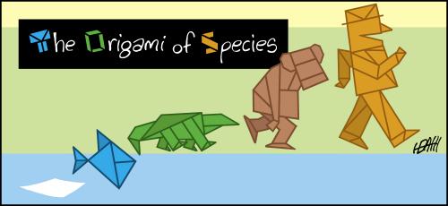 The Origin of Species as Origami